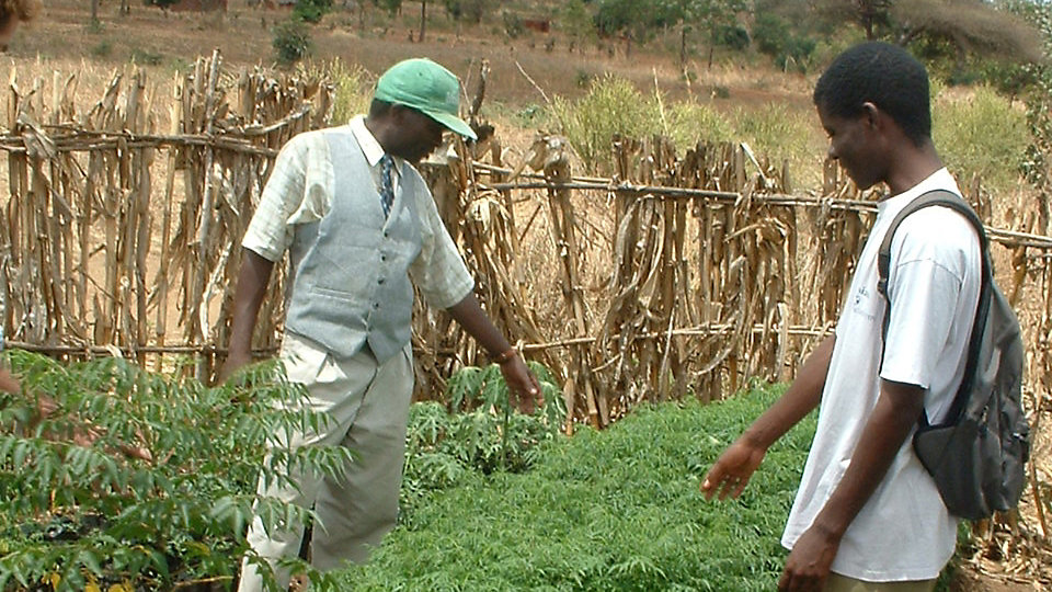 The Meru and Nanyuki Community Reforestation Project in Kenya, combines hundreds of tree planting activities and enables communities to improve access to food and create additional sources of income.